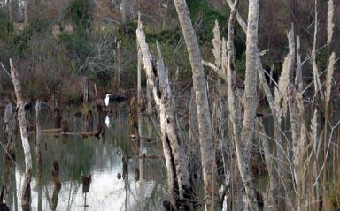 051219070swamptrees01d